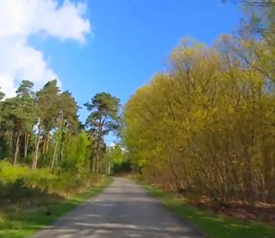 a-nature-run